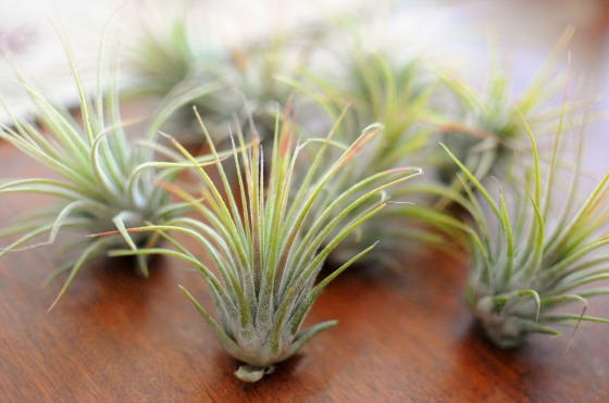 Last Minute Christmas Gift Airplants